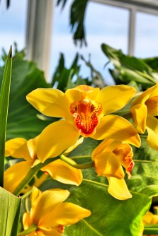 New York Botanical Gardens, The Bronx
