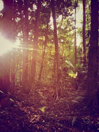 Daintree-Rainforest-3